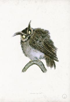 Mountain Scops Owl - artist signed print